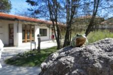 Frosch im ZIST-Garten